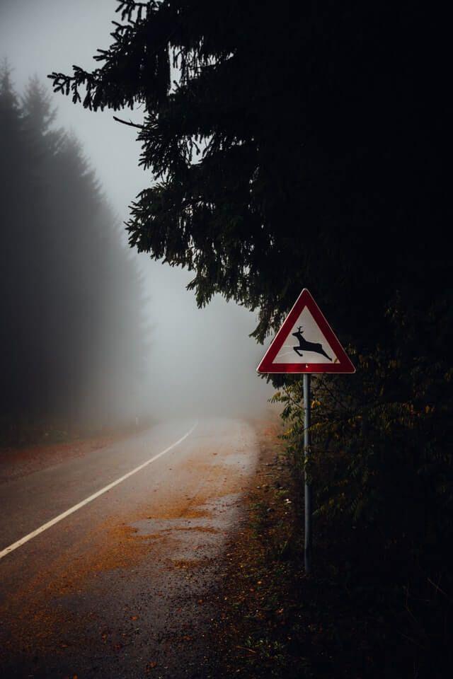 Waldstraße mit Nebel