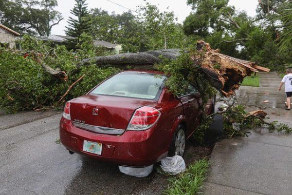 Fahrzeug liegt unter einem Baum